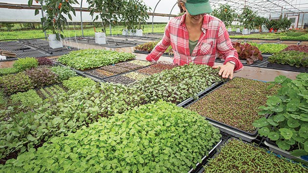 tender green shoots greenhouse leadership landing-1